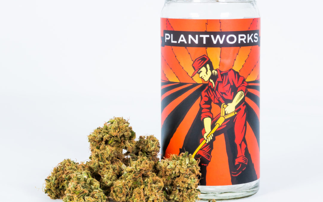 Welcome to the Cinder Family: Plantworks