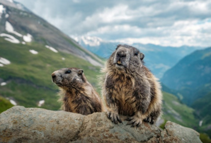 2 cute groundhogs, Groundhog Day movie