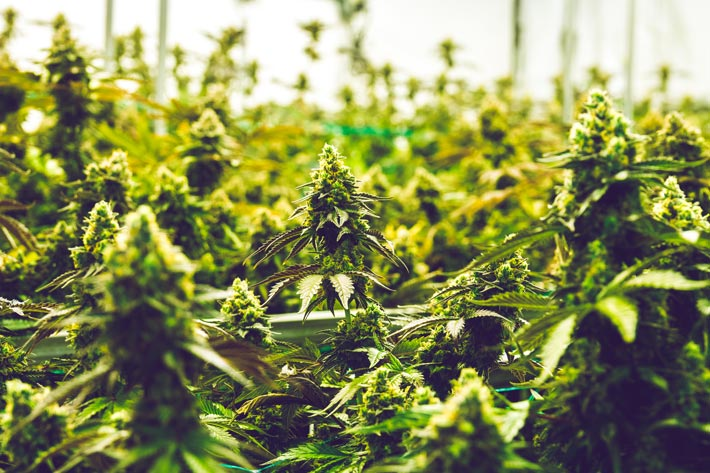 MORE federal legalization